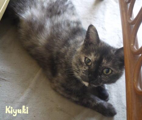 kiyuki