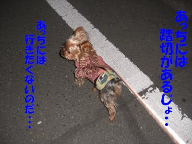 COCO+001_convert_20110129165143.jpg