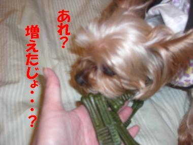 COCO+001_convert_20110202232902.jpg