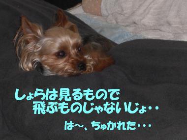 COCO+001_convert_20110515222418.jpg