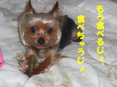 COCO+001_convert_20110614231155.jpg