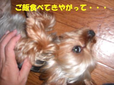 COCO+001_convert_20110828141815.jpg