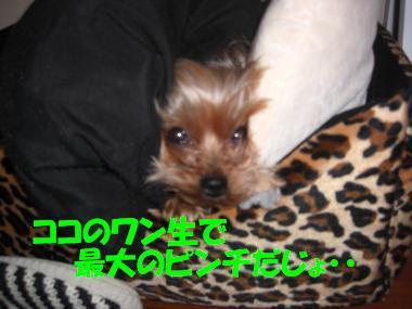 COCO+002_convert_20110208221730.jpg