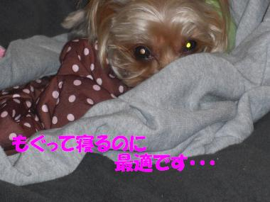 COCO+002_convert_20110220225948.jpg