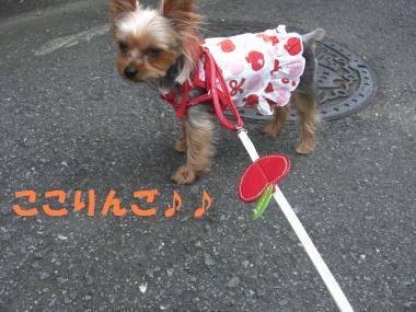 COCO+002_convert_20110731202057.jpg