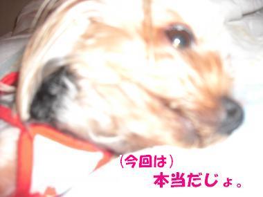 COCO+002_convert_20110813140438_20110813144732.jpg