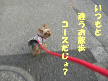 COCO+002_convert_20120222020722.jpg