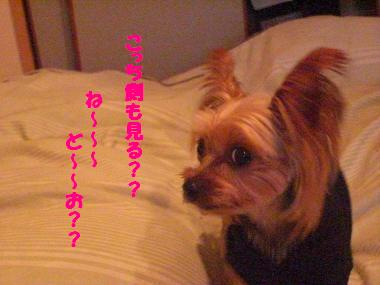 COCO+003_convert_20101121194630.jpg