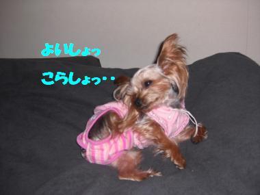 COCO+003_convert_20101124224407.jpg