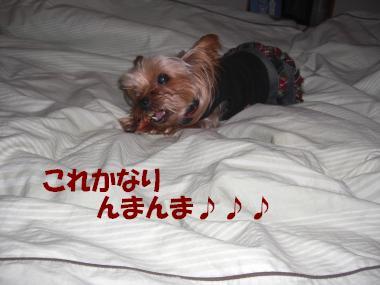 COCO+003_convert_20110109191640.jpg