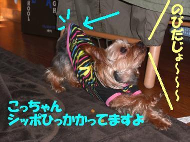 COCO+003_convert_20110226204611.jpg