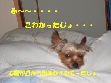 COCO+003_convert_20110828141723.jpg