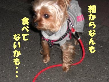COCO+003_convert_20120213221719.jpg
