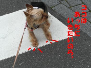 COCO+004_convert_20110605205124.jpg
