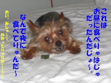 COCO+004_convert_20110626142537.jpg