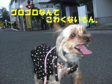 COCO+004_convert_20110828141751.jpg