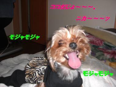 COCO+005_convert_20101121194815.jpg