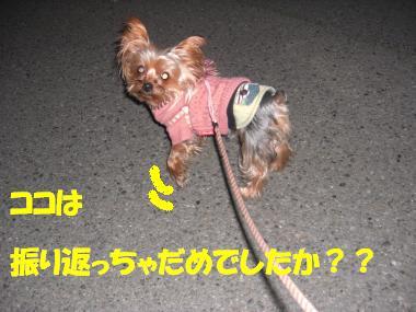 COCO+005_convert_20110129165403.jpg