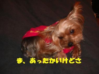 COCO+005_convert_20120228221521.jpg