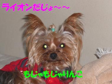 COCO+006_convert_20110220230716.jpg