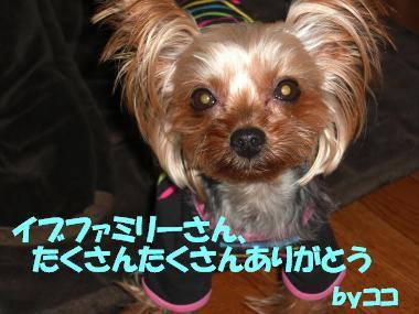 COCO+006_convert_20110226204712.jpg