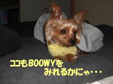 COCO+006_convert_20110523223147.jpg