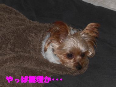 COCO+006_convert_20111130233018.jpg
