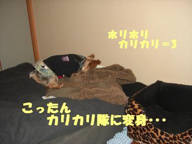 COCO+006_convert_20111218200227.jpg