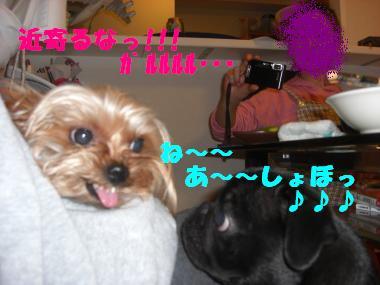 COCO+006_convert_20111227231143.jpg