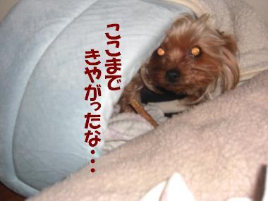 COCO+007_convert_20110109191506.jpg