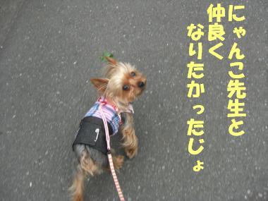 COCO+007_convert_20110703230102.jpg
