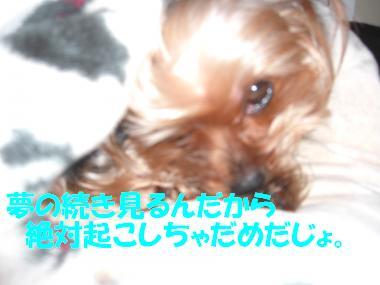 COCO+008_convert_20110202233134.jpg