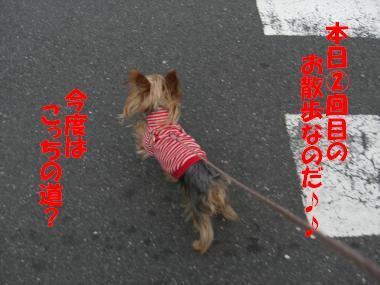 COCO+008_convert_20110219154934.jpg