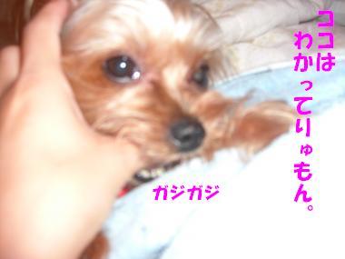 COCO+008_convert_20110813140624.jpg