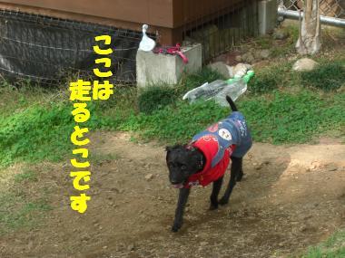 COCO+008_convert_20111112205812.jpg