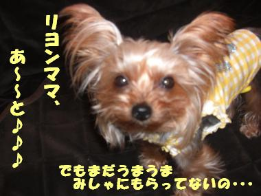 COCO+009_convert_20111223134015.jpg