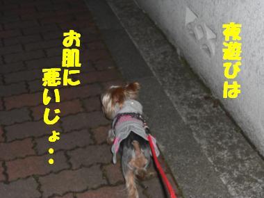 COCO+009_convert_20120222021053.jpg