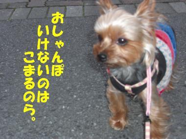 COCO+010_convert_20110605152605.jpg