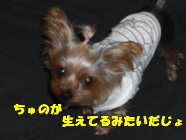 COCO+011_convert_20120129180754.jpg