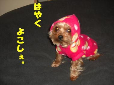 COCO+011_convert_20120228221646.jpg