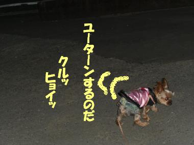 COCO+012_convert_20101212213111.jpg