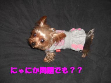 COCO+012_convert_20111215225753.jpg
