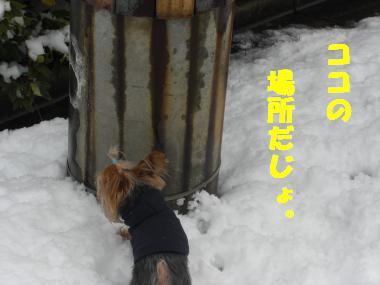 COCO+013_convert_20120226192826.jpg