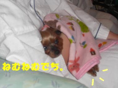 COCO+016_convert_20120419132904.jpg