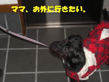 COCO+017_convert_20111120195804.jpg