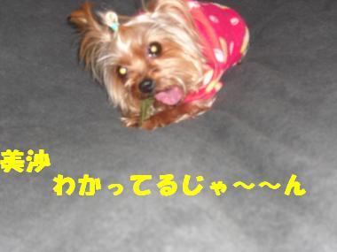 COCO+019_convert_20120228221943.jpg