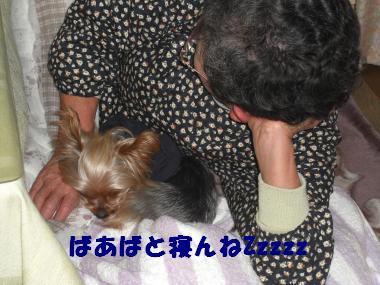 COCO+030_convert_20120226193042.jpg