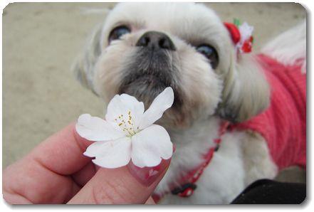 お花とむぅちん☆