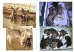 wolfdogbook02web.jpg