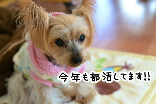 2013 部活開始! (3)
